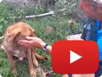 Update 11 on a rescued stray dog that was strangled with a rope on his neck - Delavar